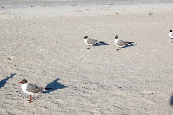 White Sands Beach Resort: beach