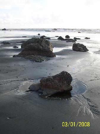 Copalis Beach 사진