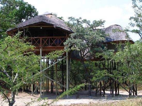 Honeymoon Treehouse Picture Of Pezulu Tree House Game Lodge