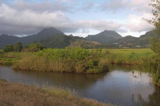 Kawai Nui Marsh : Marsh View
