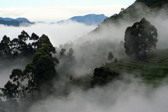 Kodaikanal, India: Misty Kodai