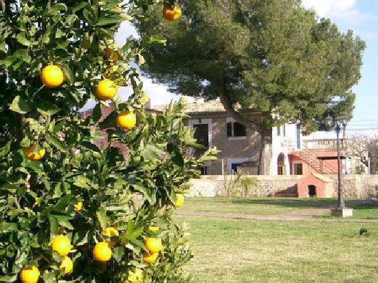 Agroturismo Alfatx: Entre los naranjos!