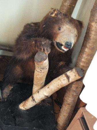 Scary Bear! - Picture of Paradox Lodge & Cedar Lodge, Lake Placid ...