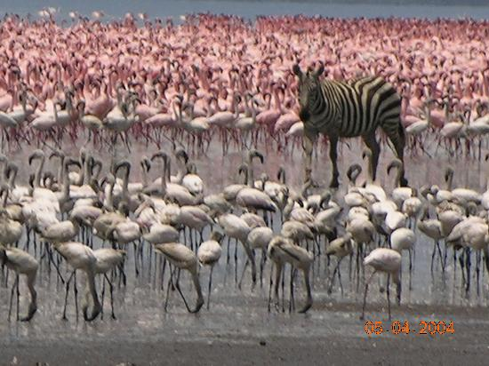Kenya: kenia