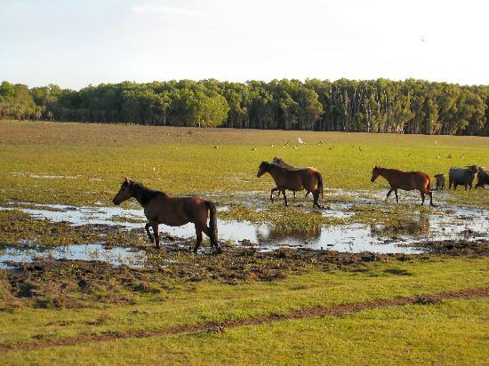 Bamurru Plains: autour du camp