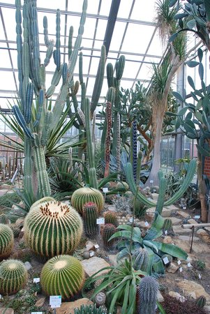 Cactus house in Kiel Botanical Gardens