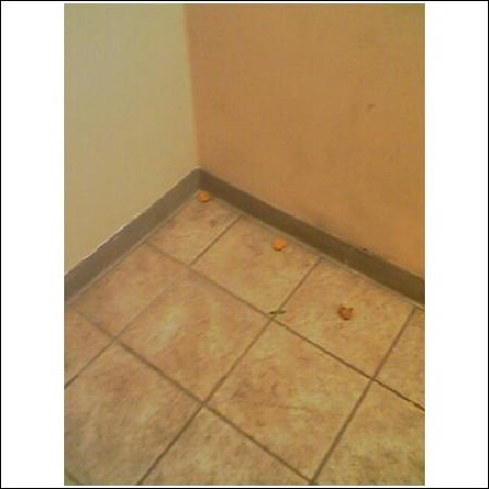 Econo Lodge Takoma Park : after the front desk kicked nuggets and corn in the corer aND down steps