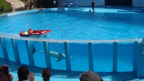 Alto da Colina Aparthotel : zoo marine