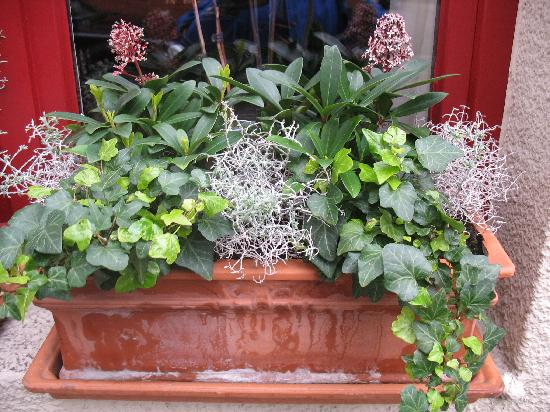 Window box at Hotel Groeninghe