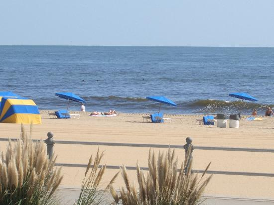 Dolphins Virginia Beach 07 Picture Of Virginia Beach Virginia Tripadvisor