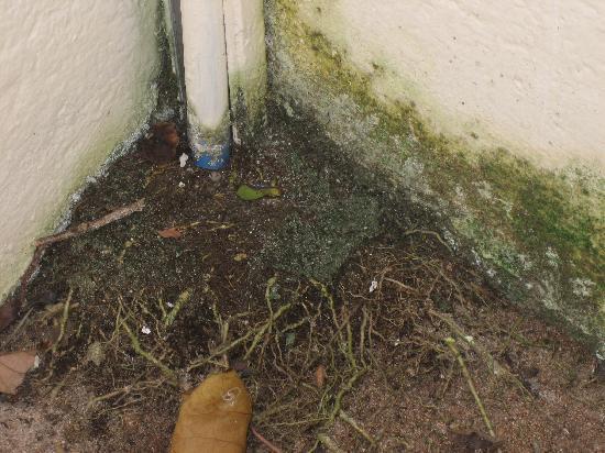 Giravaru Resort : ants nest in the bathroom