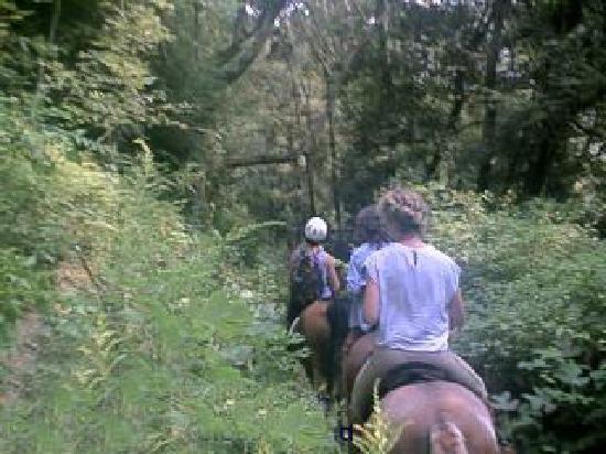 Bent Creek Experimental Forest: Bent Creek Trail