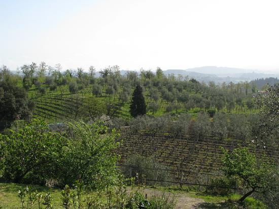 Agriturismo Il Mattone : view from the room