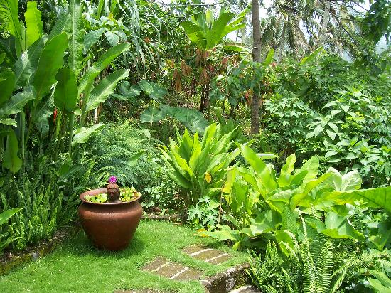 Sarinbuana Eco Lodge: Our backyard