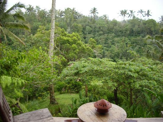 Sarinbuana Eco Lodge: Our frontyard