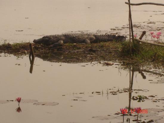 Bagerhat, Bangladesh: crocodile of KhanJahhan Ali's Dighi