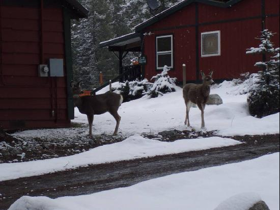 Wallowa Lake Resort: Deer right outside our cabin