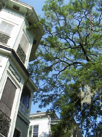 Savannah International Pensione: The hostel from the front steps - love the moss in the trees!