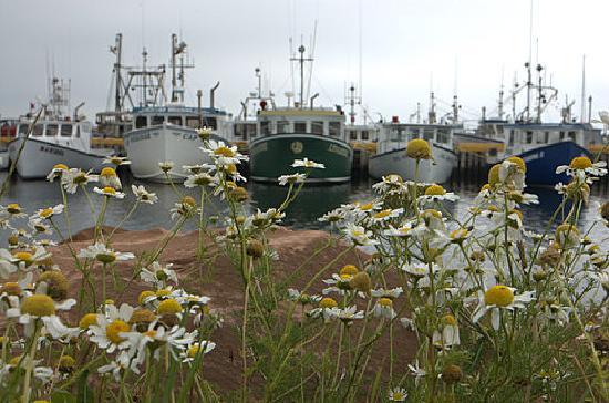 Iles de la Madeleine, Kanada: bateaux de pêche