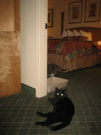Staybridge Suites Las Cruces: Kitties in the doorway to the bedroom