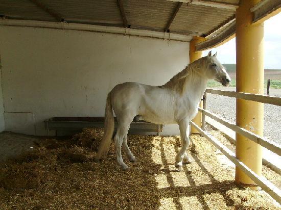 Hotel Cortijo Soto Real: spanish stallion