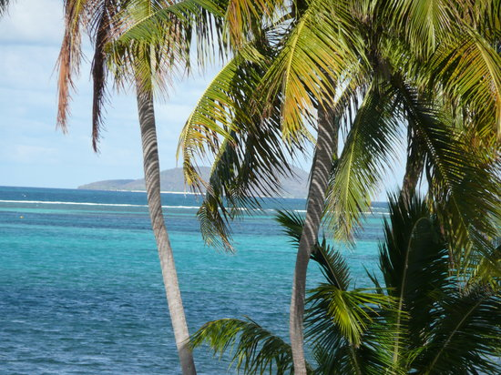 St. Croix: Buck Island Through the Palms