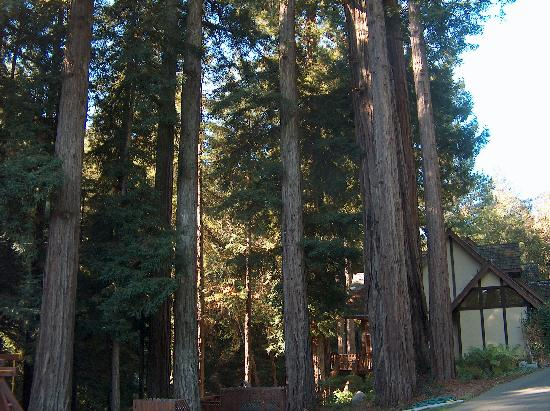 Avalon, a Luxury Bed & Breakfast: many trees and the side of the house