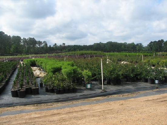 Forest Hill, LA: Rows and Acre's of Plants!