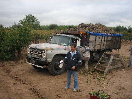 Conalbi Grinberg Casa Vinicola: Sergio Grinberg - Happy with the harvest!