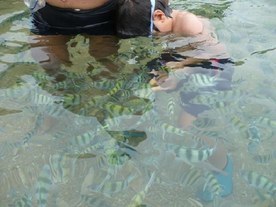 Charm Churee Villa: Plenty of fish