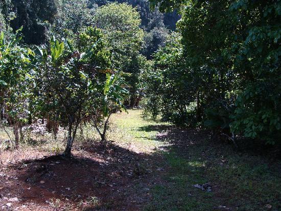 TJ Ranch : greenery