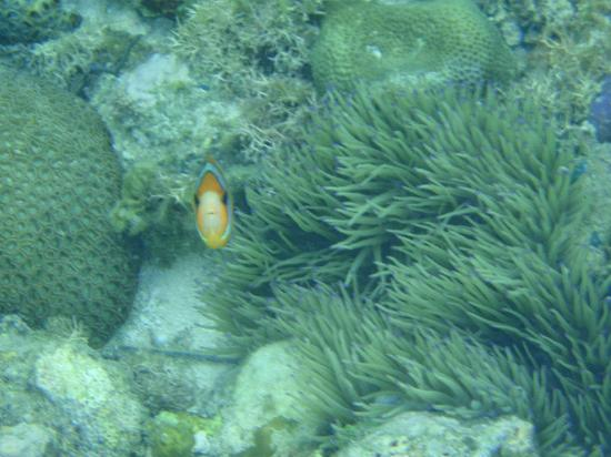 Cabana Beach Club Resort: Found Nemo off the shore!