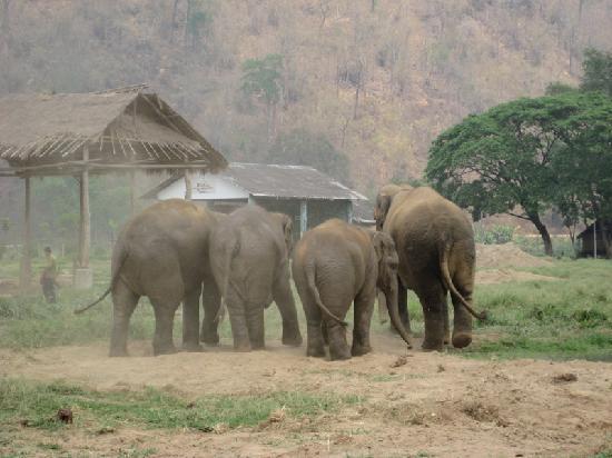 Julie Guest House: Elephants at the nature park.