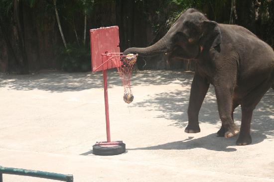 Chonburi, تايلاند: Sriracha Tiger Zoo - Elephant Show