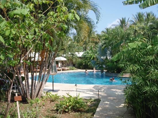 Harmony Hotel Nosara: The Swimming Pool