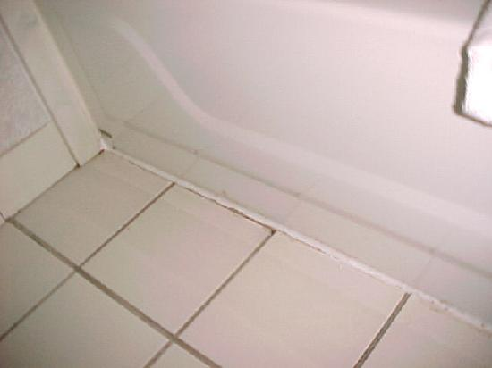 Mold in bathroom picture of super 8 midlothian richmond for Mold in a bathroom