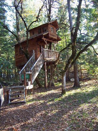 Out 'n' About Treehouse Treesort: Serendipitree  Our Place!