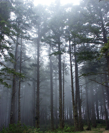 Point Reyes Station, Kalifornia: Pine Forest
