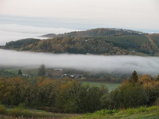 Youngberg Hill Vineyards & Inn: Rising fog in the valley