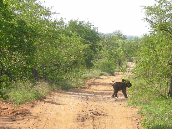 andBeyond Ngala Safari Lodge: 3 day old baby elephant