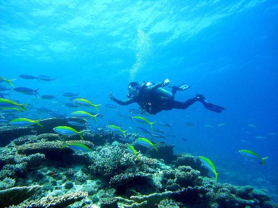 Mirihi Island Resort: Lots of fish