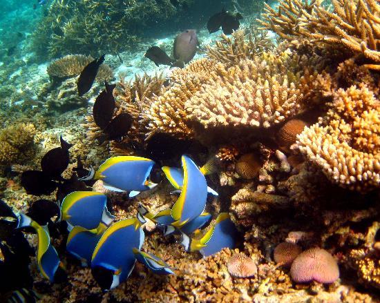 Mirihi Island Resort: snorkelling