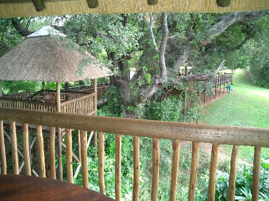 Burchell's Bush Lodge: The resort next door has viewing decks for the river animals