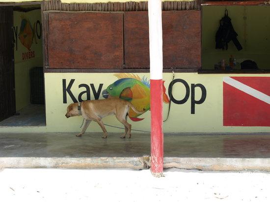 Kay-Op Divers