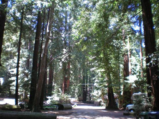 Big Sur Campground & Cabins 사진
