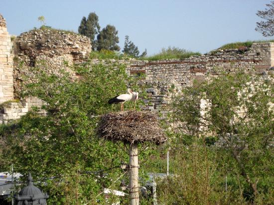 Hotel Bella: Storks at breakfast