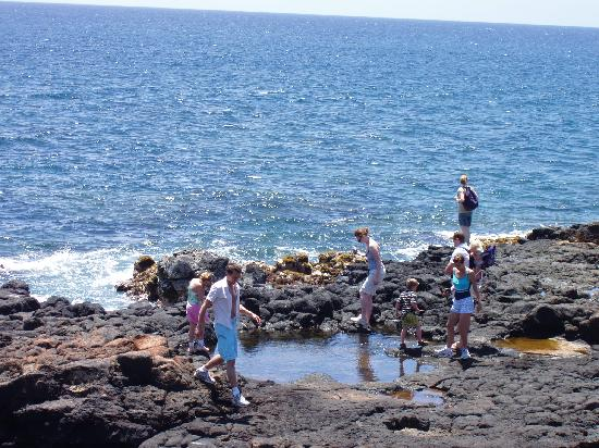 Regency Resorts Condominiums: Exploring tidepools.