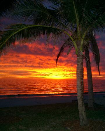 Seaside An All-Suite Resort : Palm tree sunset