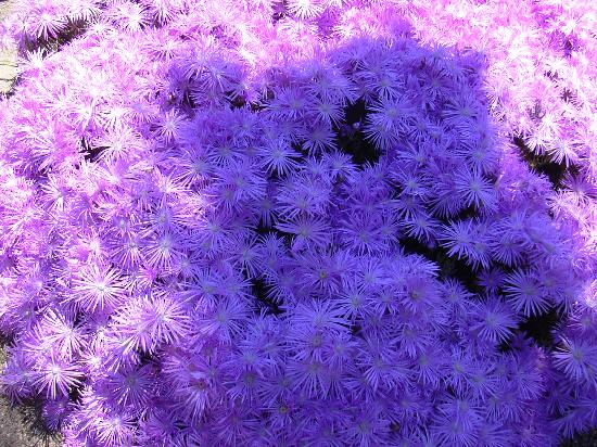 Sa Domu Cheta: fiori dell'orto Botanico