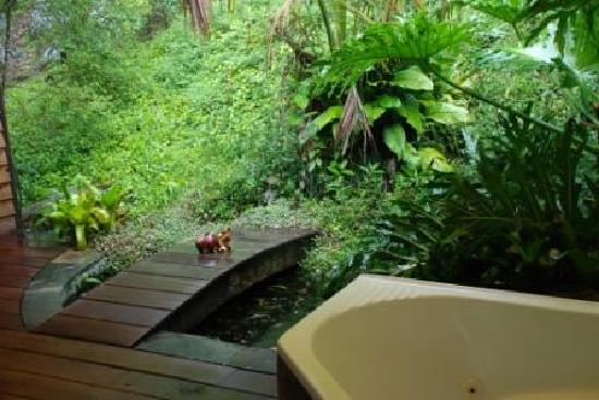 Amazing Wollumbin Palms Retreat at Mt Warning: This is the little koi pond with the outside spa in the corner